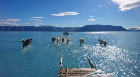 雪橇犬在水面行走(推特截图)