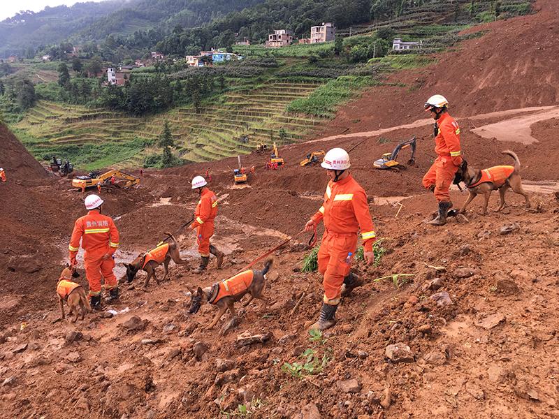 救援人員在山體滑坡現場指揮搜救犬開展救援。