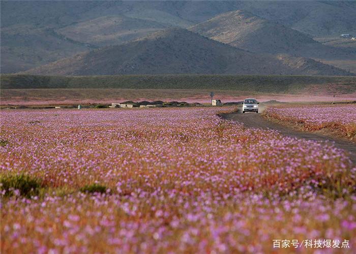 沙漠长出绿洲,本来是件好事,科学家为何高兴不起来?