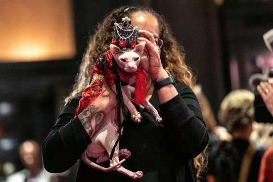 """喵星人时装秀在纽约举行,穿着""""高端定制""""服装走秀 旨在唤起关注动物遗弃问题"""