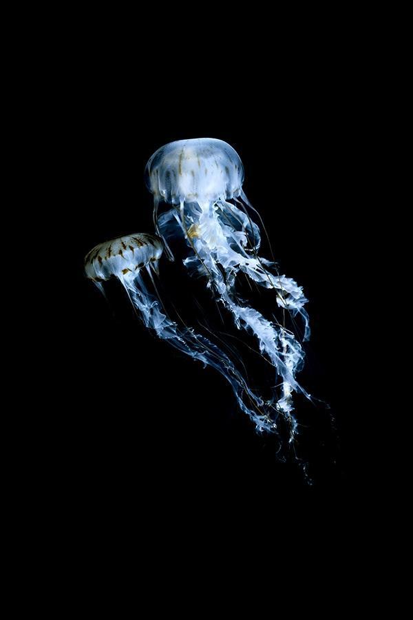 精美生态摄影欣赏——闪亮的海洋生物