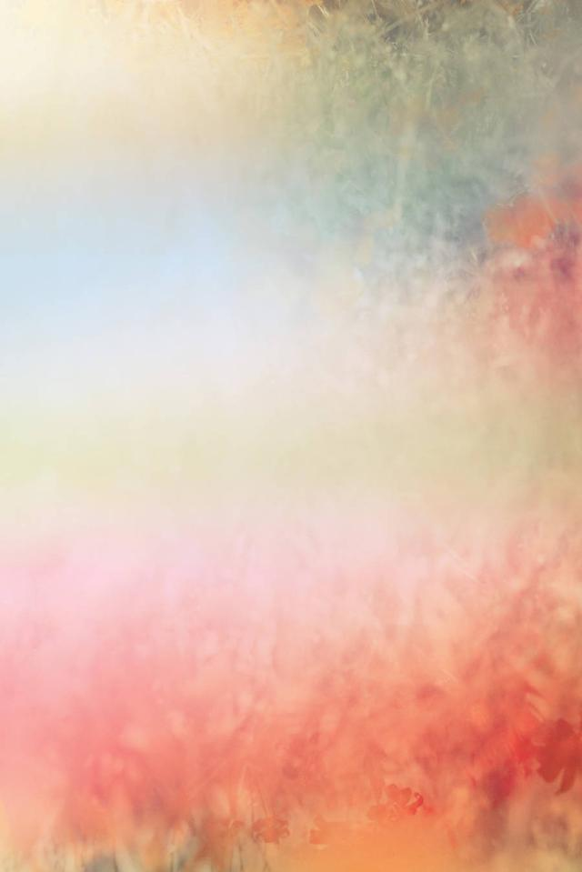 朦朦胧胧生态摄影欣赏——野花