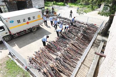 8月12日,海南省在昌江集中销毁近两年来全省公安机关收缴的非法枪支、管制刀具以及警用报废枪支。 海南日报记者 袁琛 通讯员 蒋升 摄