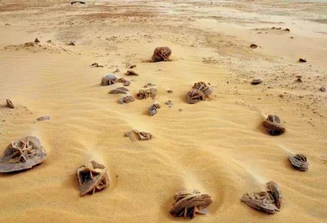 沙漠中看見「石頭」要撿起是為何?探險者:錯過就沒了