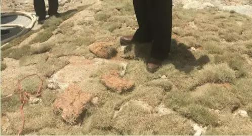 漳浦綠地建材貿易有限公司在混凝土上鋪設草皮 。