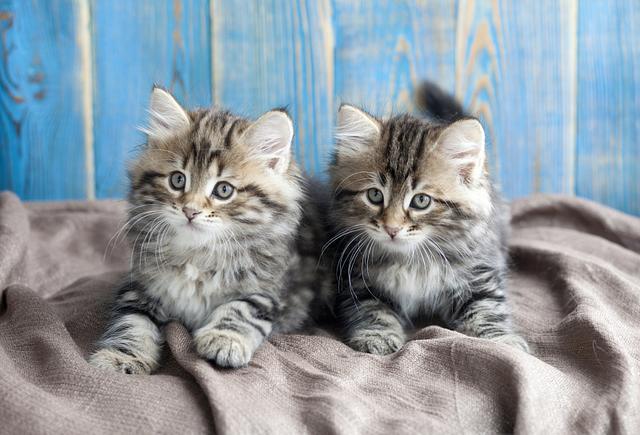 克隆猫背后的生意经:38万可克隆宠物狗