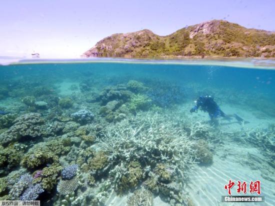 原料图:大堡礁珊瑚展现白化表象。