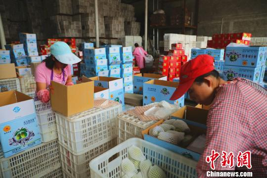 库尔勒城郊一保鲜库里正在装载塑料筐外运。 杨厚伟 摄