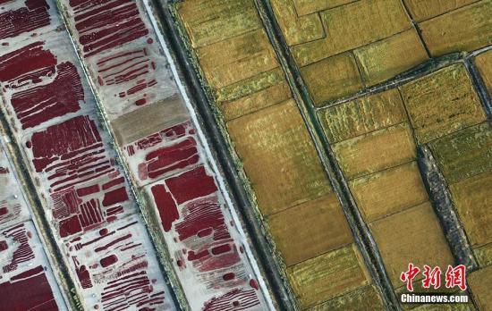 國務院發表《中國的糧食安全》白皮書 全面介紹中國糧食安全成就