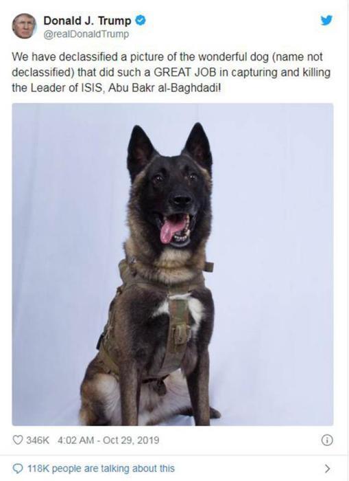 抓捕巴格达迪有它一份功劳 特朗普晒受伤军犬照片