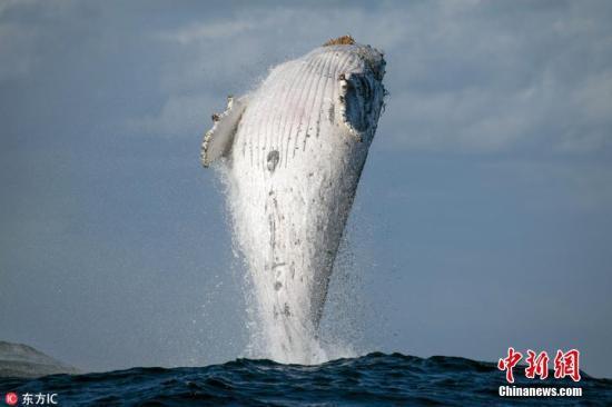 为保护鲸类等 南非将全面暂停沿海地区章鱼捕捞