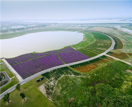 高淳聚焦农业+休闲旅游模式 打造生态富民产业