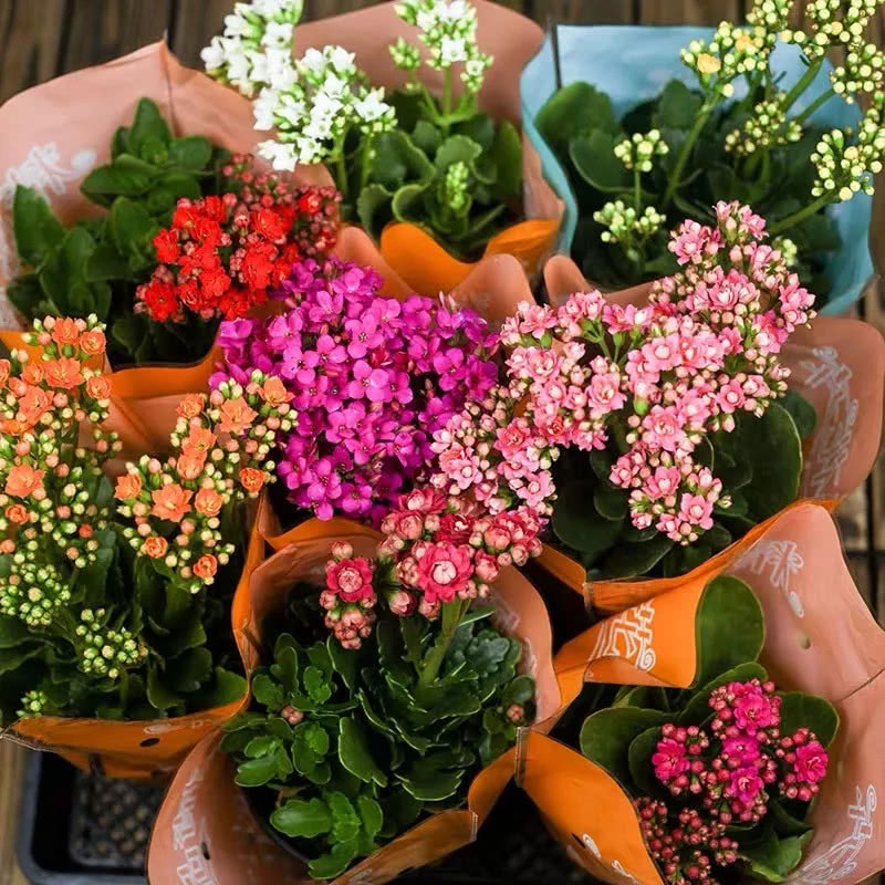 这些寓意健康长寿的植物,特别适合送给老人