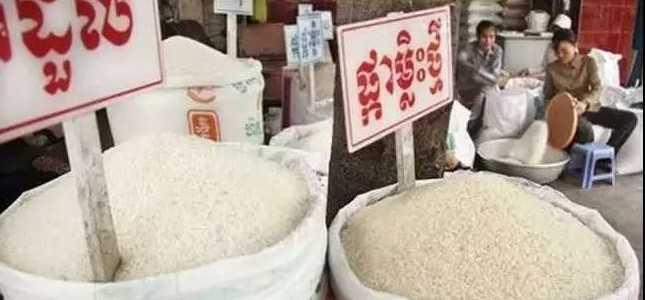 前11个月柬埔寨出口51万吨大米,四成销往中国