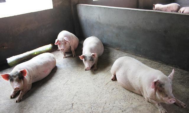 """省级两会的""""头等大事"""":部署生猪供应,解决托育难题"""