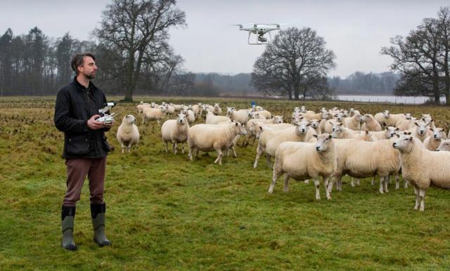 2500万只羊怎么放?新西兰人解锁了无人机放牧的N种玩法