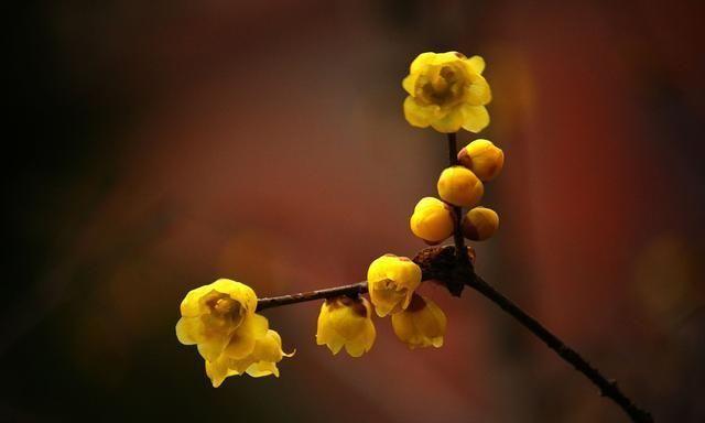 寒冬时节,梅花盛开,看摄影师们怎样拍出梅花的意境