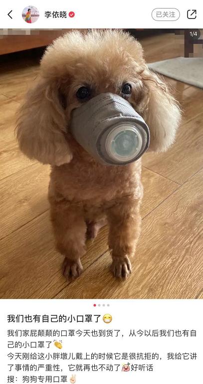 李依晓分享宅家日常,泡牛奶浴给狗狗穿新衣戴口罩,活得超精致!