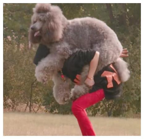 女人与狗欢爱_巨型泰迪不肯回家,女主人直接蹲下去,下个动作让人尴尬