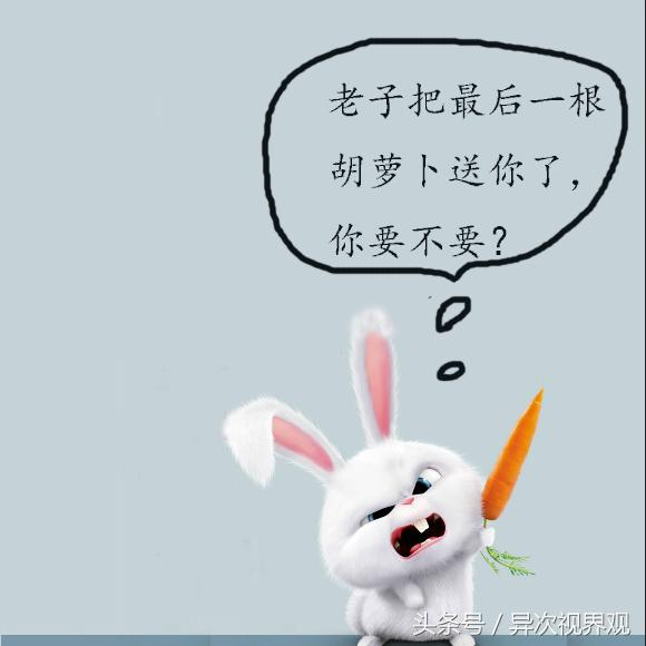 趣味表情包之壞壞的萌兔子:我注意你很久了圖片