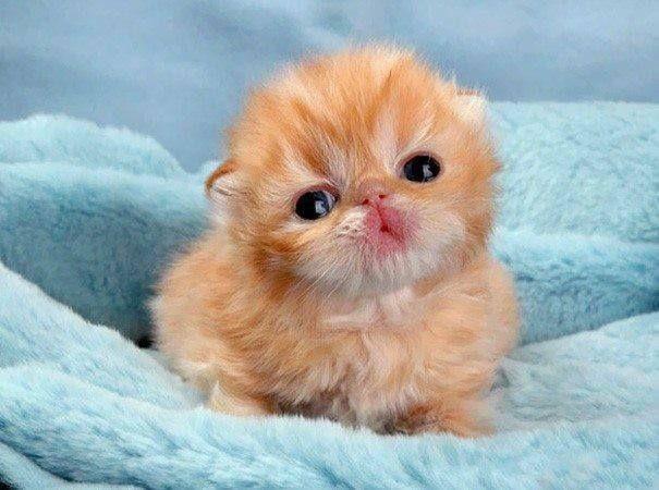 猫咪视频_假如猫咪不是胎生而是卵生,出生时是什么视觉效果