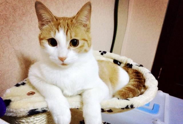 日本田园猫_\