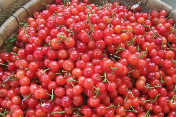 车厘子和大樱桃到底有什么区别?为什么价格相差那么大?涨知识了