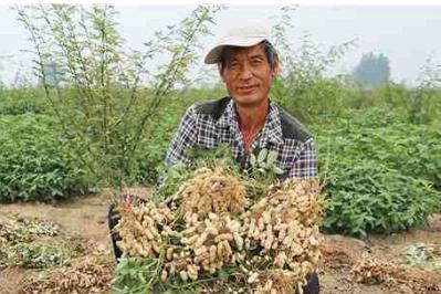 为何农民不想种,莫非是转基因食品