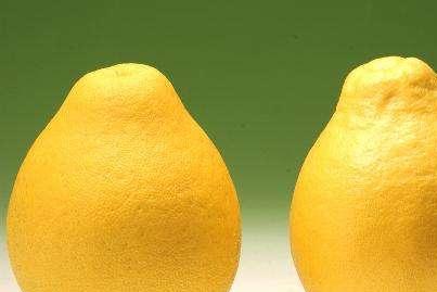 买柚子时,要怎么挑选,才能挑到皮薄肉多的柚子?老果农有话说!