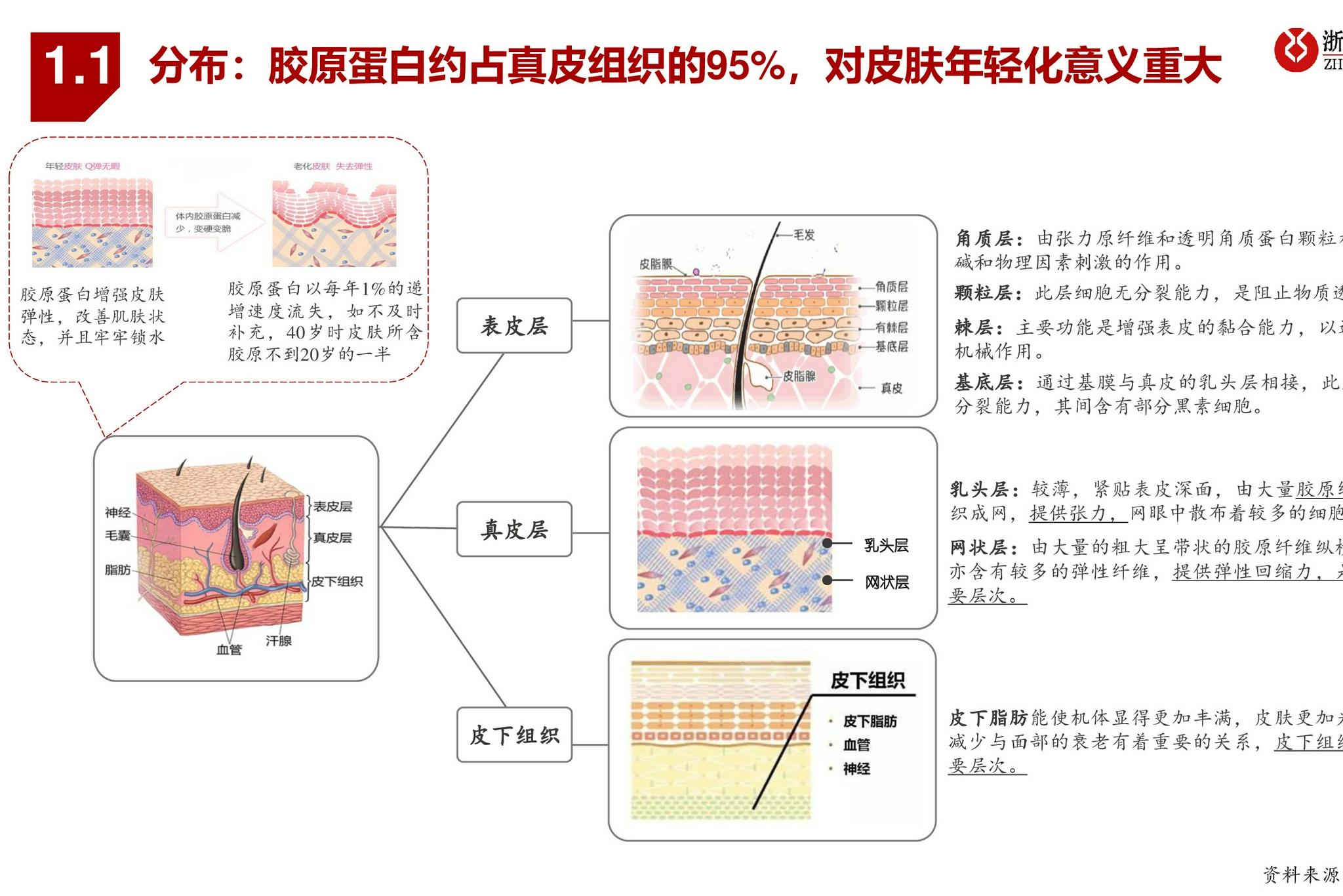 胶原蛋白行业深度研究报告:与玻尿酸并驾齐驱的掘金赛道