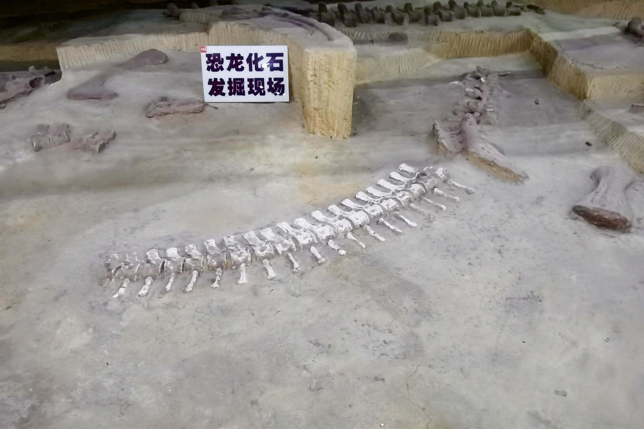 长春自然博物馆恐龙化石发掘现场,原创拍摄