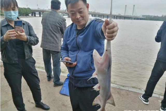 南阳鸭河水库开闸放水 鸭嘴鱼随洪而泄 白河钓鱼君冒险垂钓