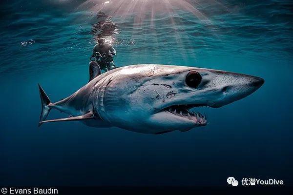 2021年联合国世界海洋日摄影大赛20张获奖作品公布(完整版)