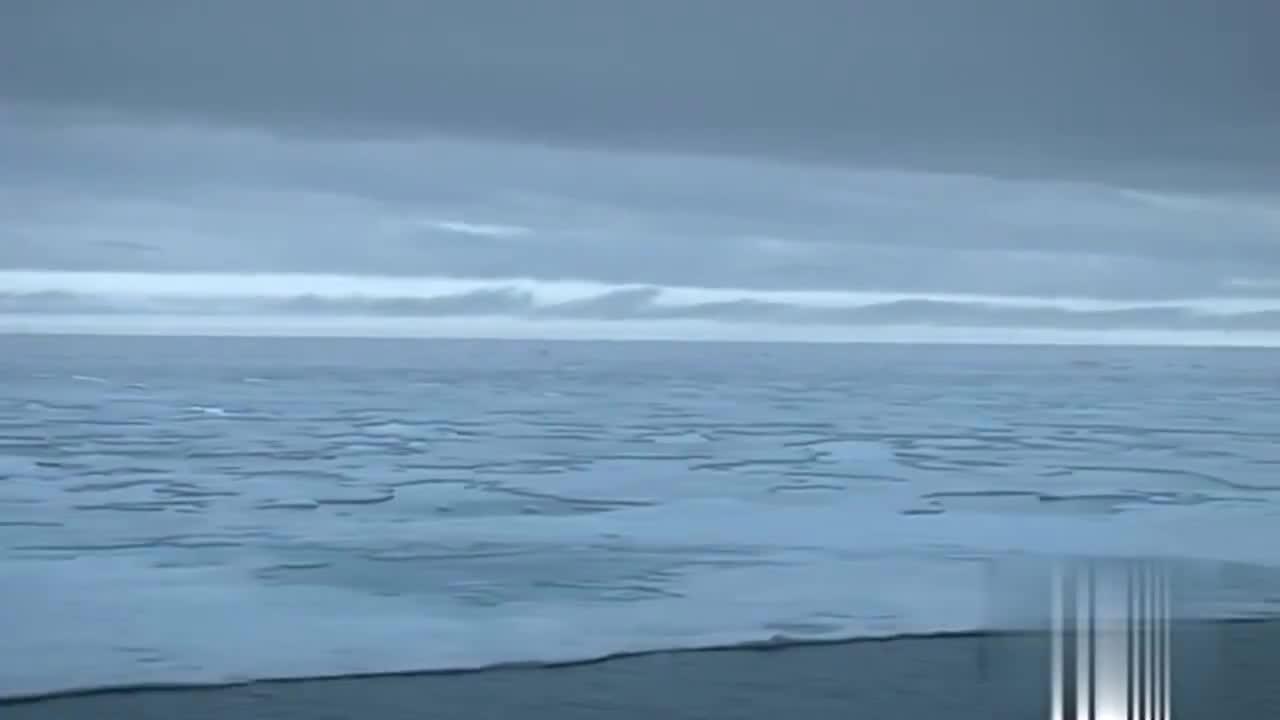 北极熊为一只海豹,干了起来
