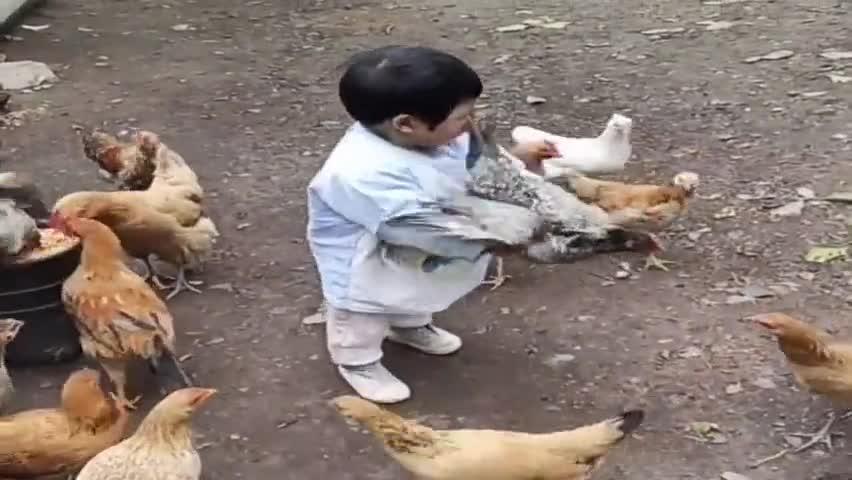 自从宝宝回老家,母鸡一天比一天瘦了,下一幕差点笑翻了!