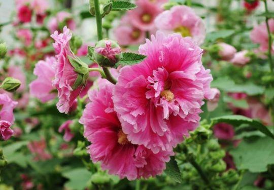 几款花卉,养一盆满屋飘香,心情愉快,天天好心情