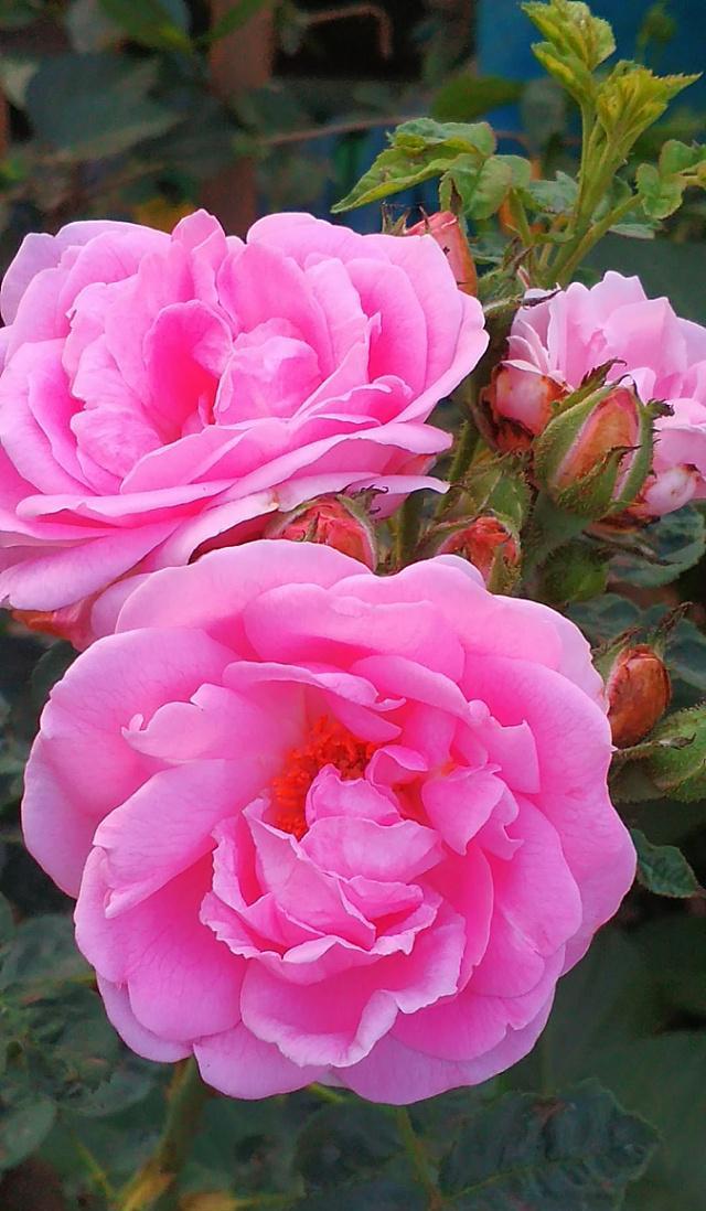 """写花朵最精彩唐诗诗句,""""唯有牡丹真国色"""",下一句是什"""