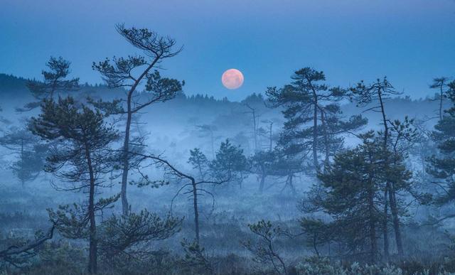 王安石夜里出门散步,看到夜色中的美景,即兴写下一首唯美的诗!