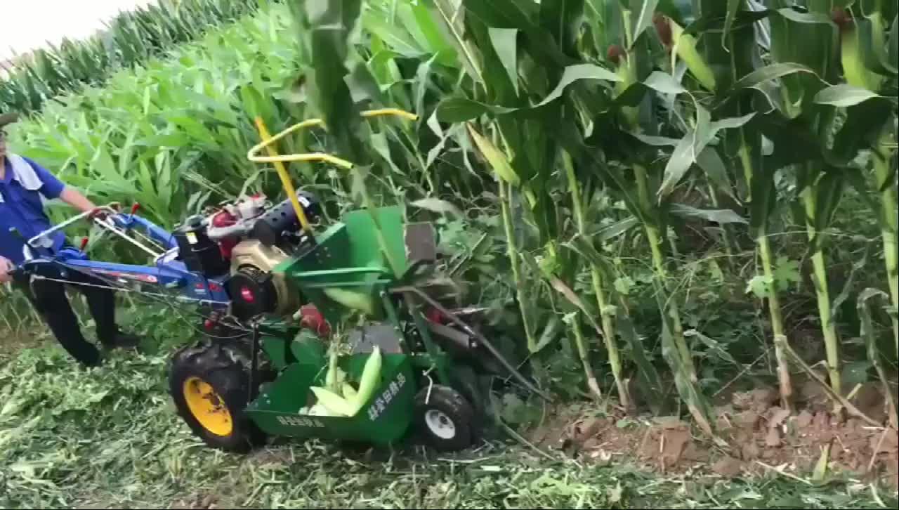 这款小型玉米收割机是我见过个头最小的,农村的又一伟大发明