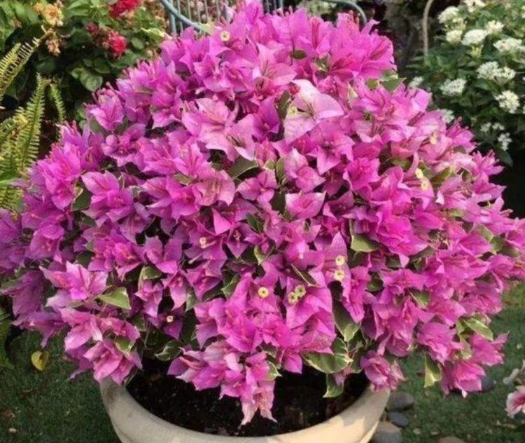 几款花卉便宜又好养,丢到阳台,好养活上档次,净化空气效果好