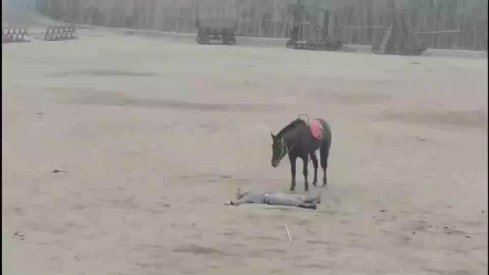 这匹马是跟谁学的演戏,演技我咋看着比人演的都要好