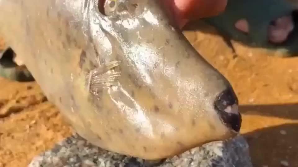 哥们儿在户外抓到了老鼠鱼,看到这样的长相,我顿时没有了食欲!