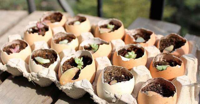 鸡蛋壳怎么变成花肥,通过两步处理,花儿根系旺