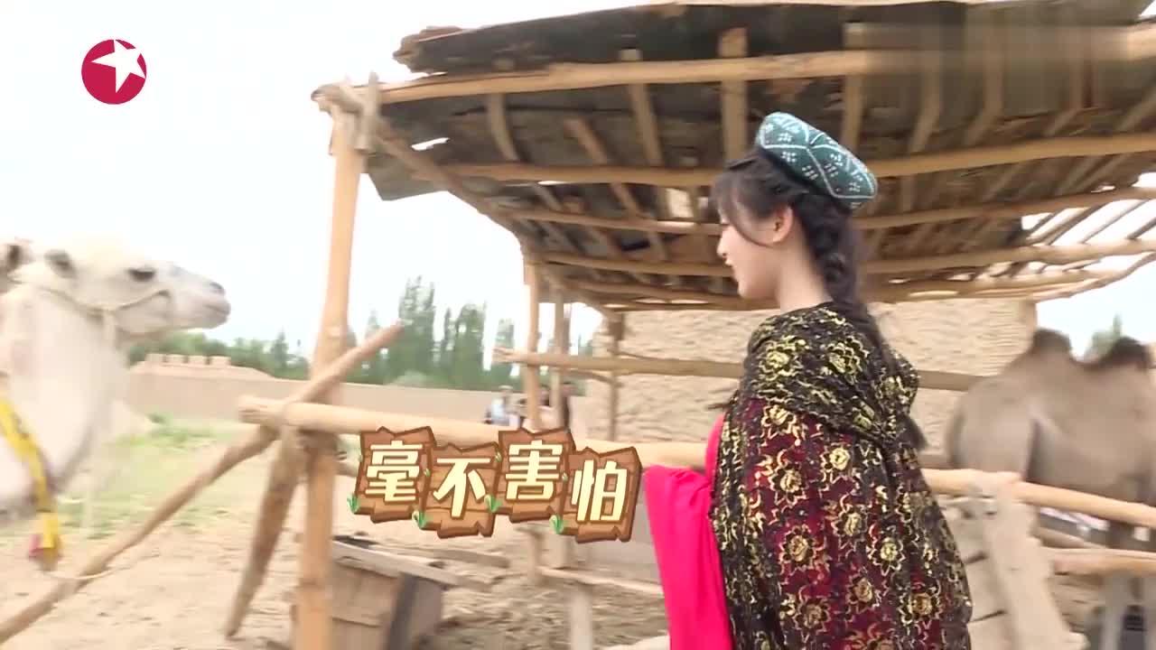 极限挑战:杨超越和骆驼合影,骆驼却趁超越不注意咬了她一口?