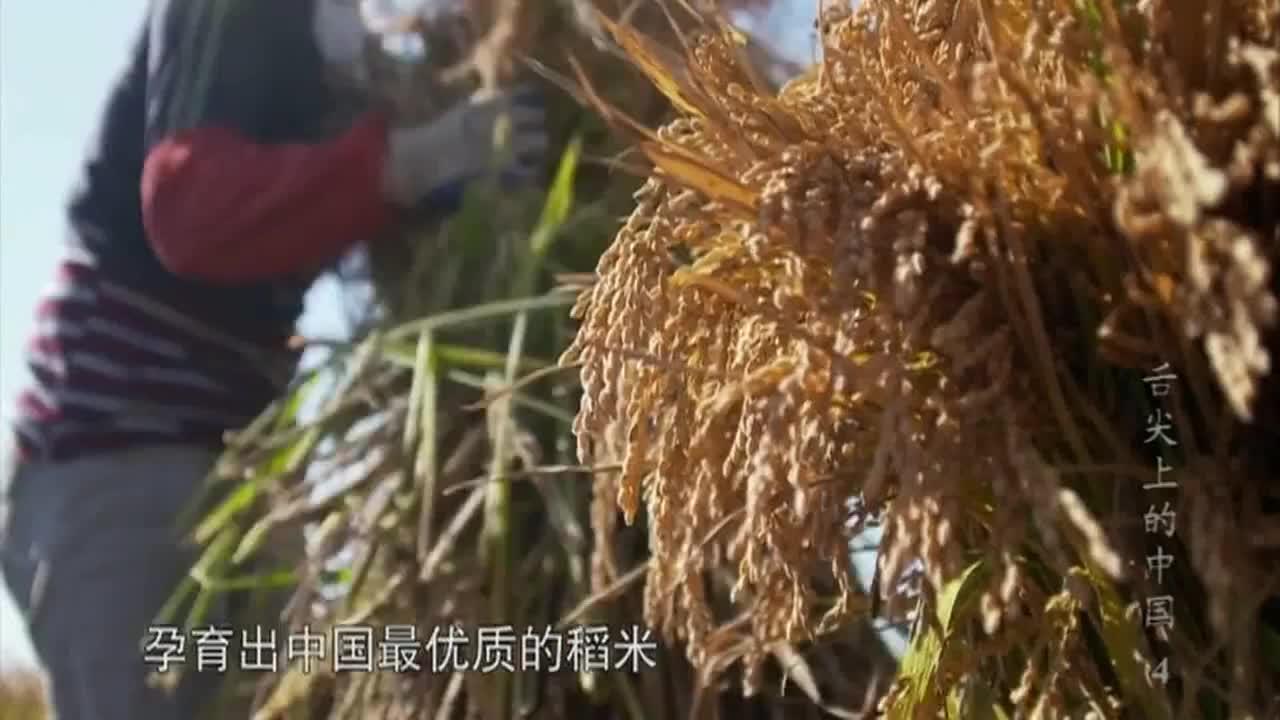 舌尖上的中国:风味独特的泡菜,已成为让本地人难以割舍的美食