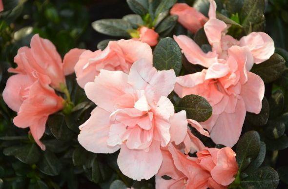 家养几种植物,养在阳台,轻松开出花海,鲜艳夺目,美艳迷人
