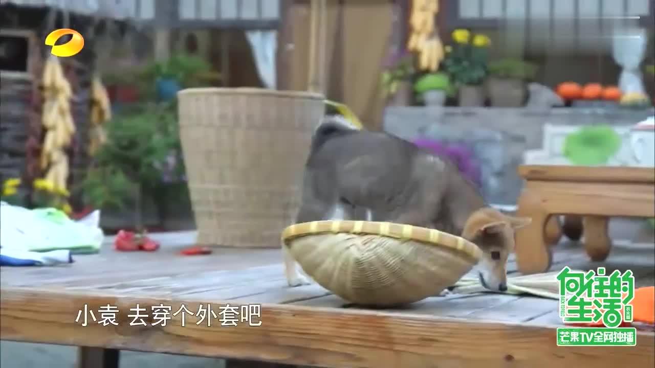 何炅教刘宪华撩妹,刘宪华现学现卖,丁霞笑疯了