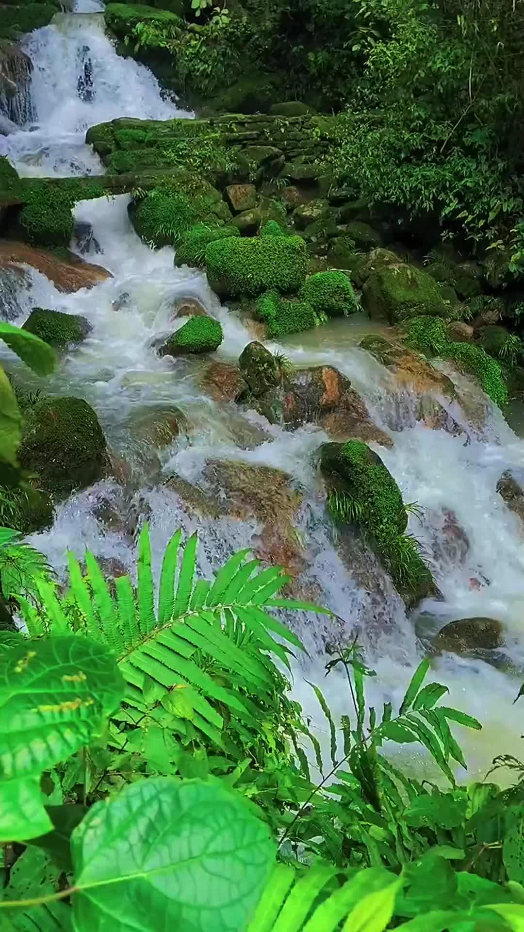一首堪称经典的《周深-浓情淡如你》如同山涧潺潺流水,直击灵魂