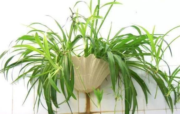 """两种肥料的使用方式,""""生根剂""""也可作为肥料,使用时注意用量"""