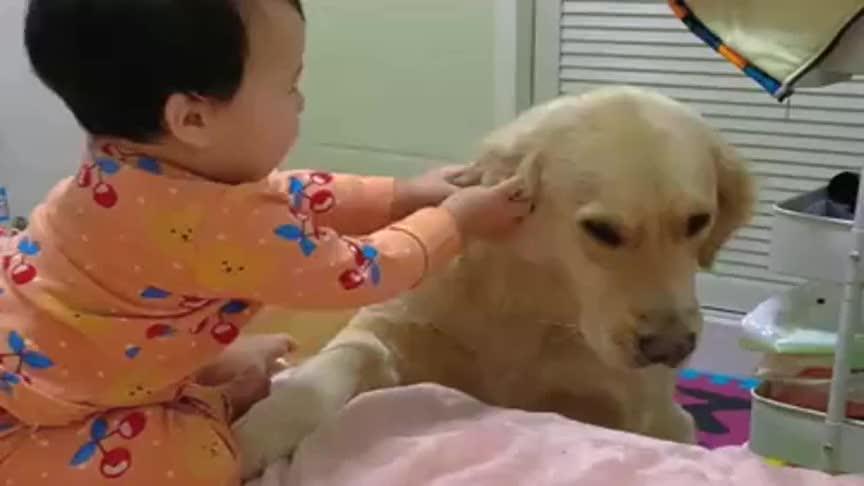 一岁的闺女,把小狗都快惹急了,老是欺负人家,真当小狗是吃素的